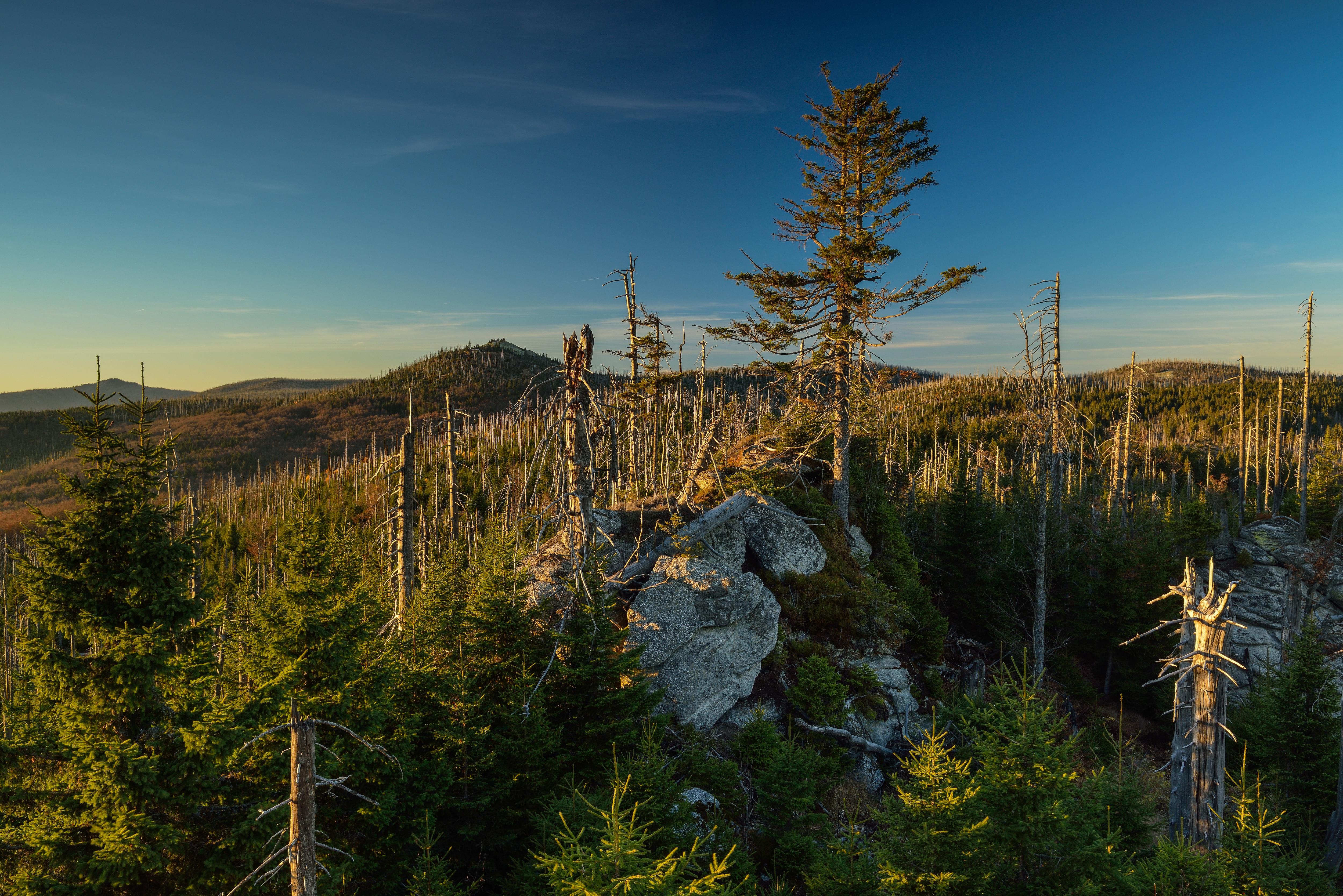 Wald Himmel